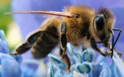 Management boek 'Bijenherder